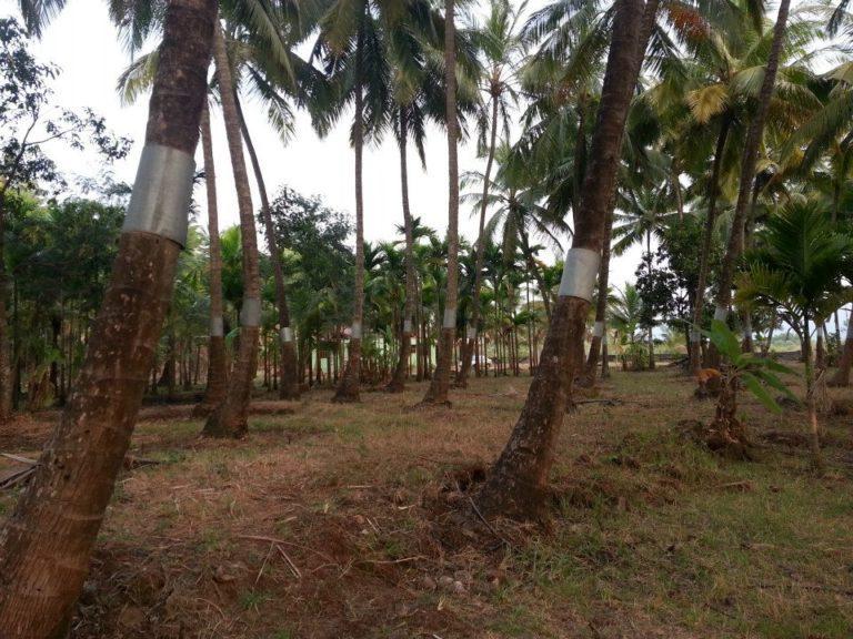 Bagmandla Agro Eco Tourism Farm - Rooms | Harihareshwar ...